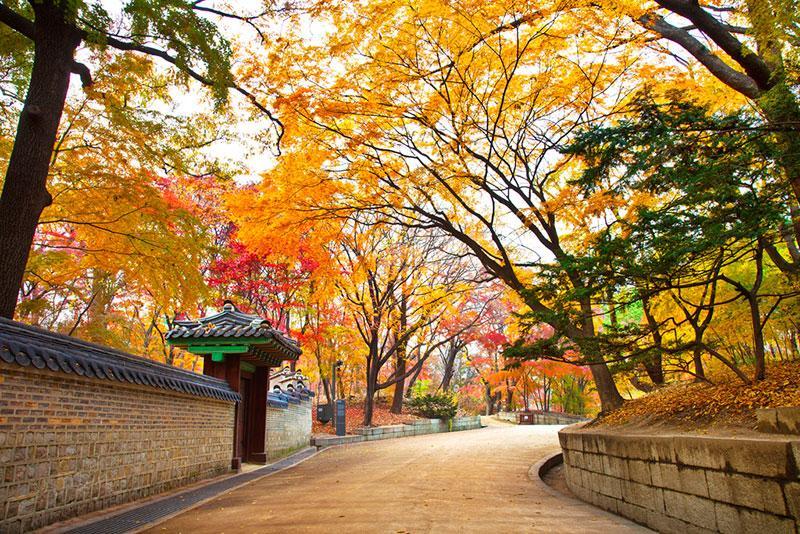 MÙA THU LÁ VÀNG TẠI HÀN QUỐC - SEOUL-JEJU-NAMI-EVERLAND-NAMSAN