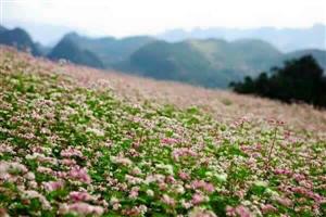 Địa điểm chụp ảnh đẹp, chill nhất Hà Giang năm 2020